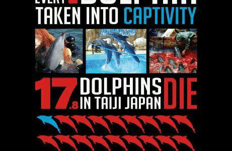 [127] Taiji Dolphin Slaughter Brings Backlash